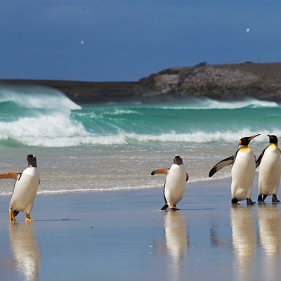 Falkland Islands and Antarctica