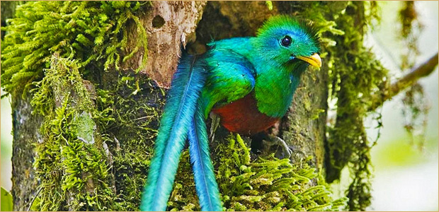 Monteverde Cloud Forest tour specialist