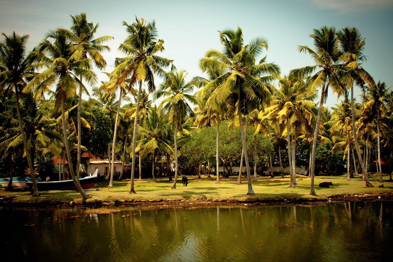 Southern India tropical forest
