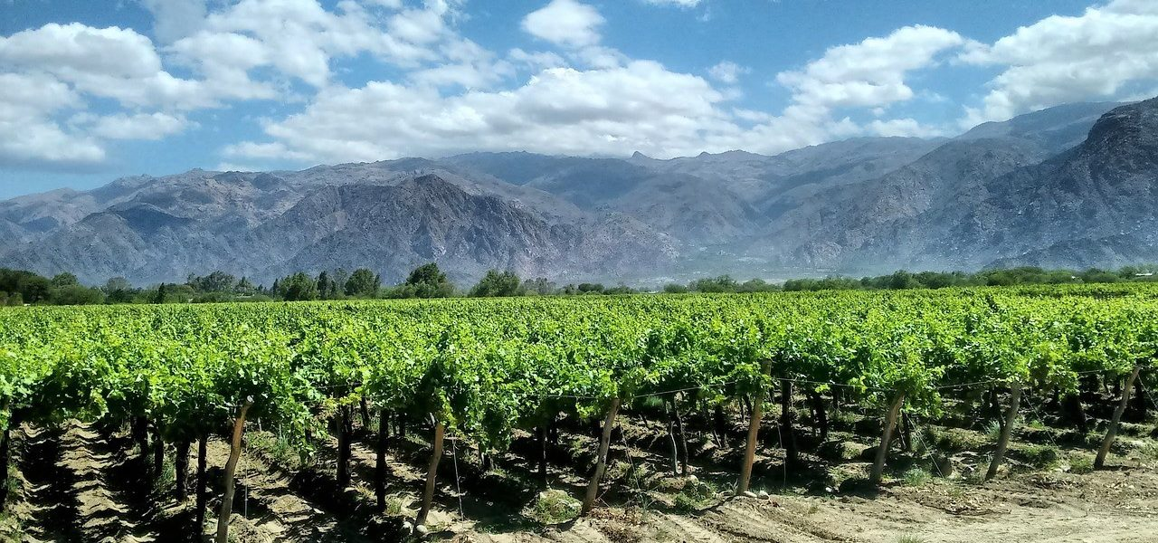 Argentina Wine and Wonders Tour
