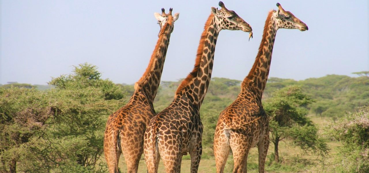 Private Tanzania Safari Adventure