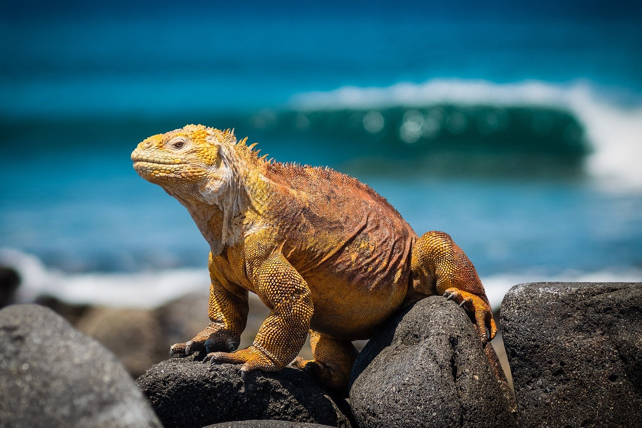 Ecuador and Galapagos Islands Adventure