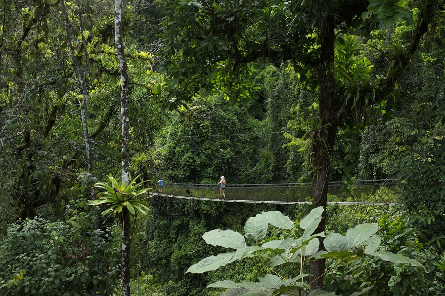 Costa Rica vacation hanging bridge