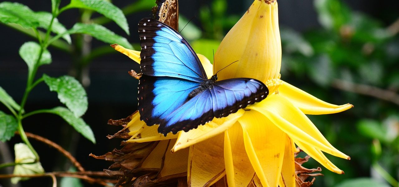 Costa Rica Vacation for Nature Lovers